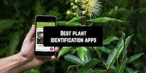 Best Apps to recognize plants with your smartphone